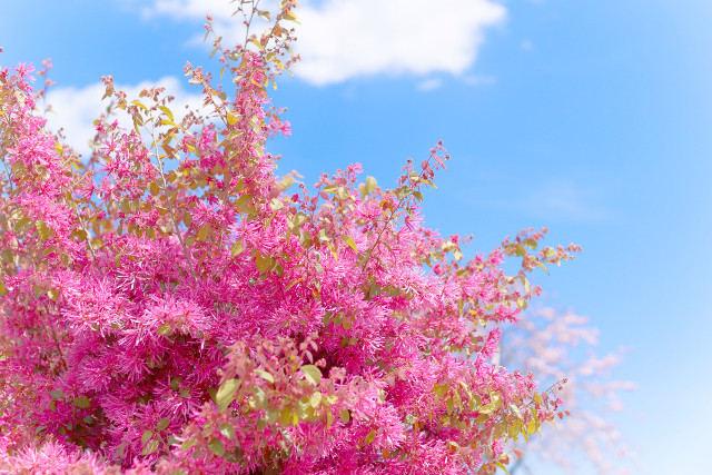 埼玉で霊園をお探しなら閑静な墓地「花園むさしの浄苑」~資料請求・見学も受付中~