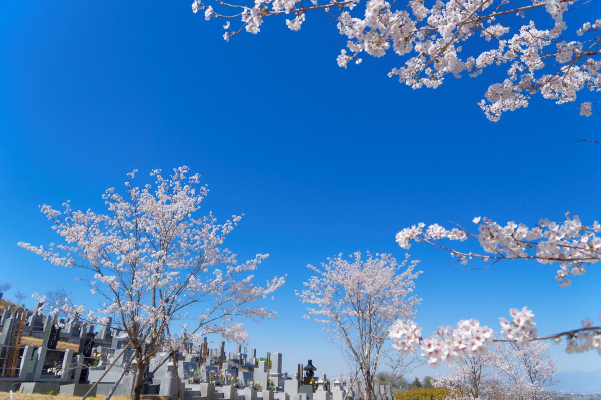 花園むさしの浄苑のソメイヨシノ2018年